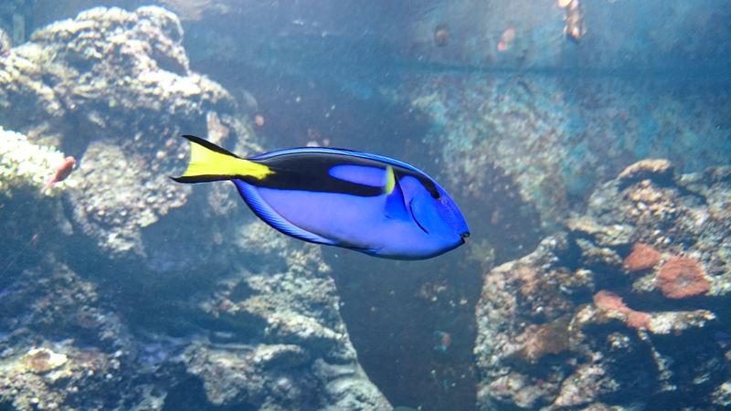 Kliamahaus Fischi